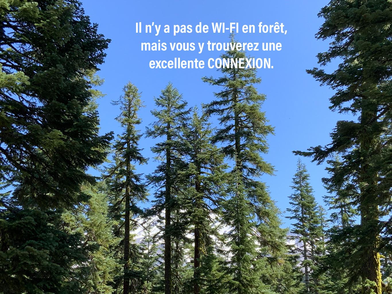 Citation sur la connexion en forêt