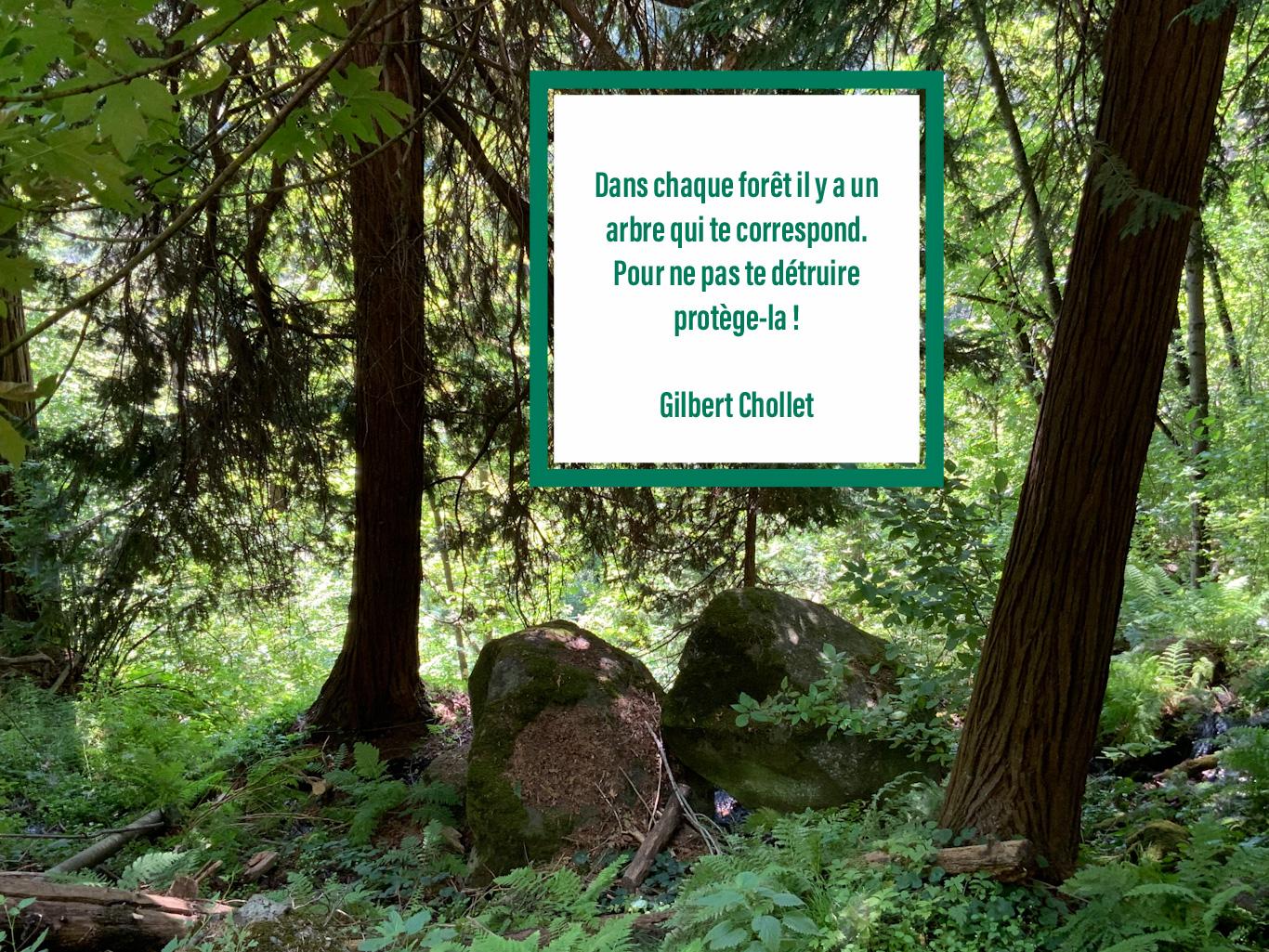 Citation sur l'importance de protéger les forêts