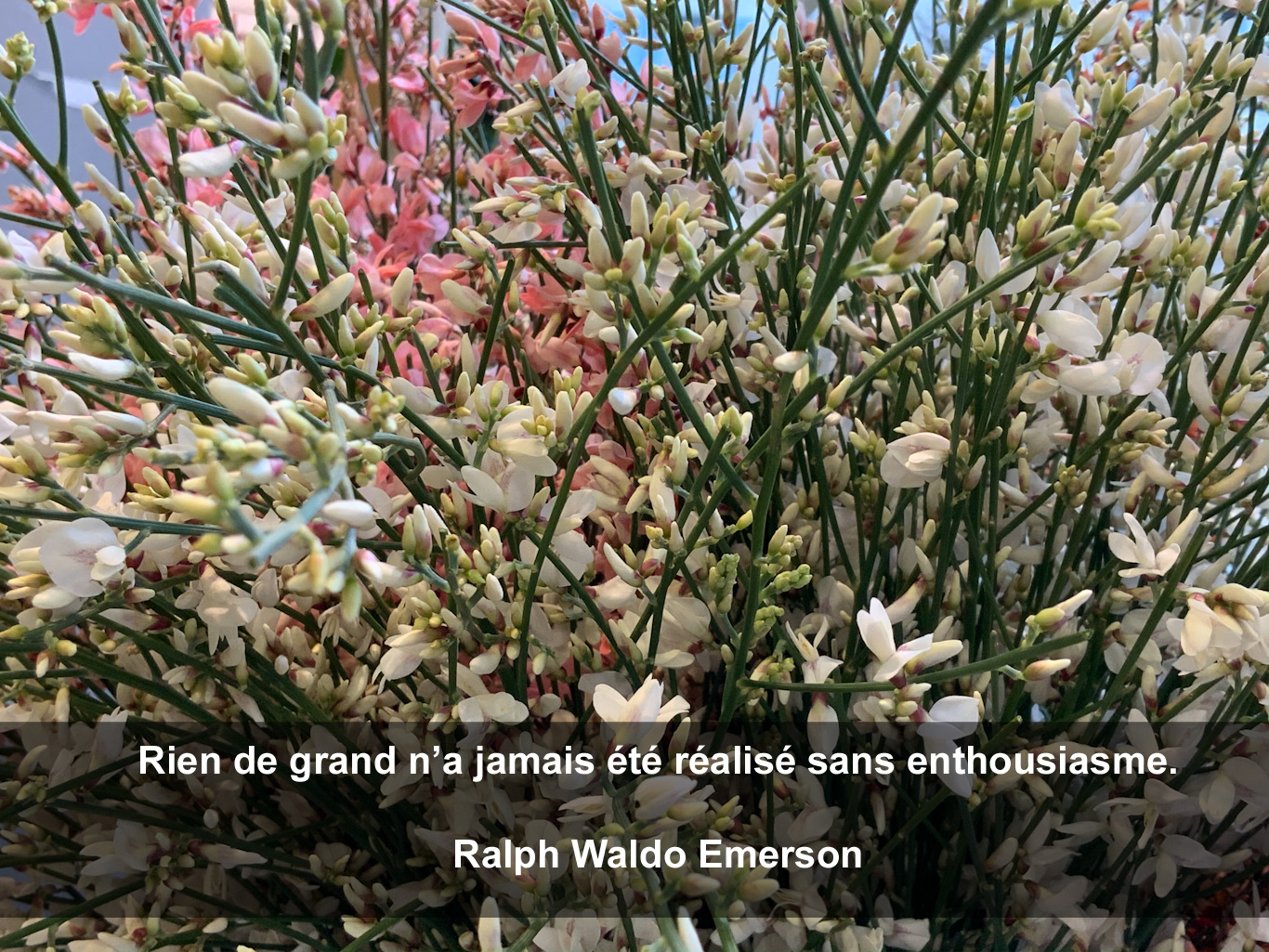 Citation d'Emerson sur l'enthousiasme, fond fleuri
