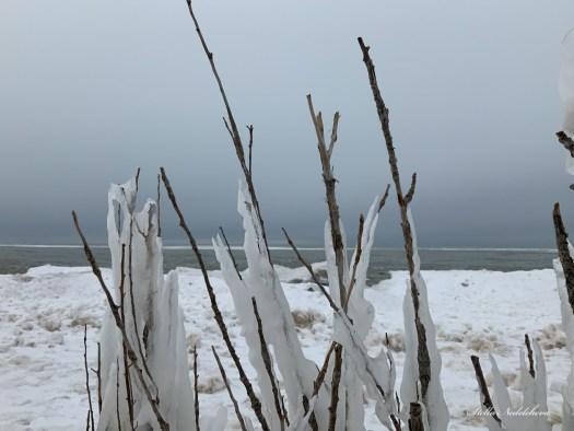 Branches gelées  au bord du lac Huron