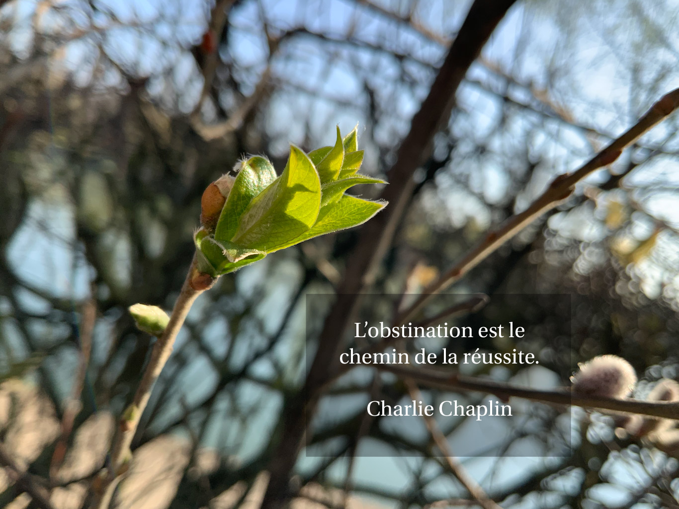 Citation - obstination et réussite
