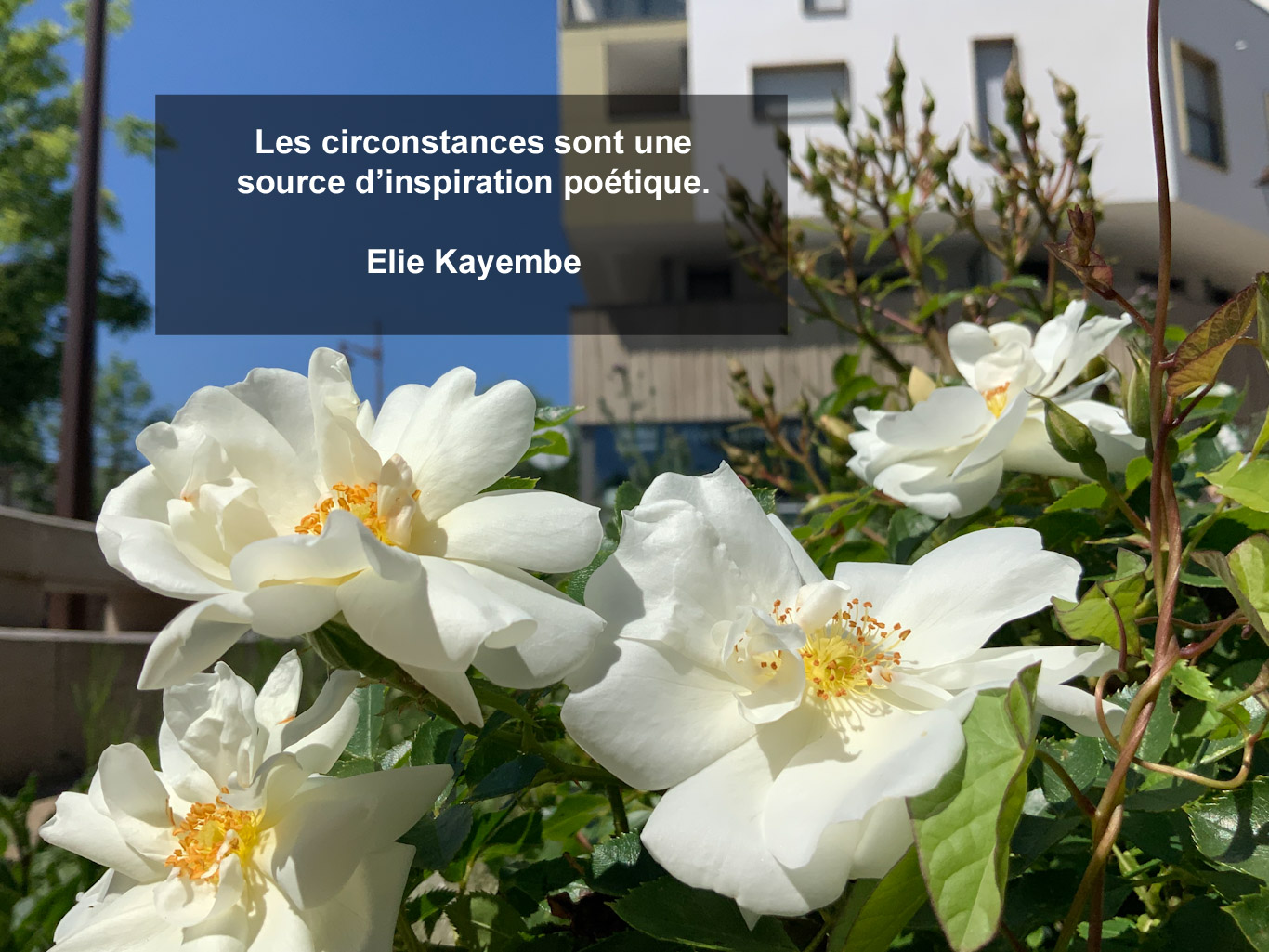 Citation - circonstances et inspiration