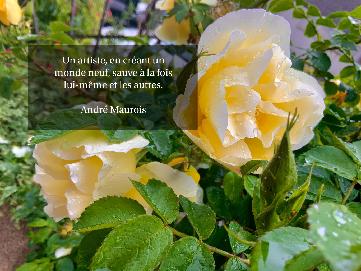 Citation - un monde neuf