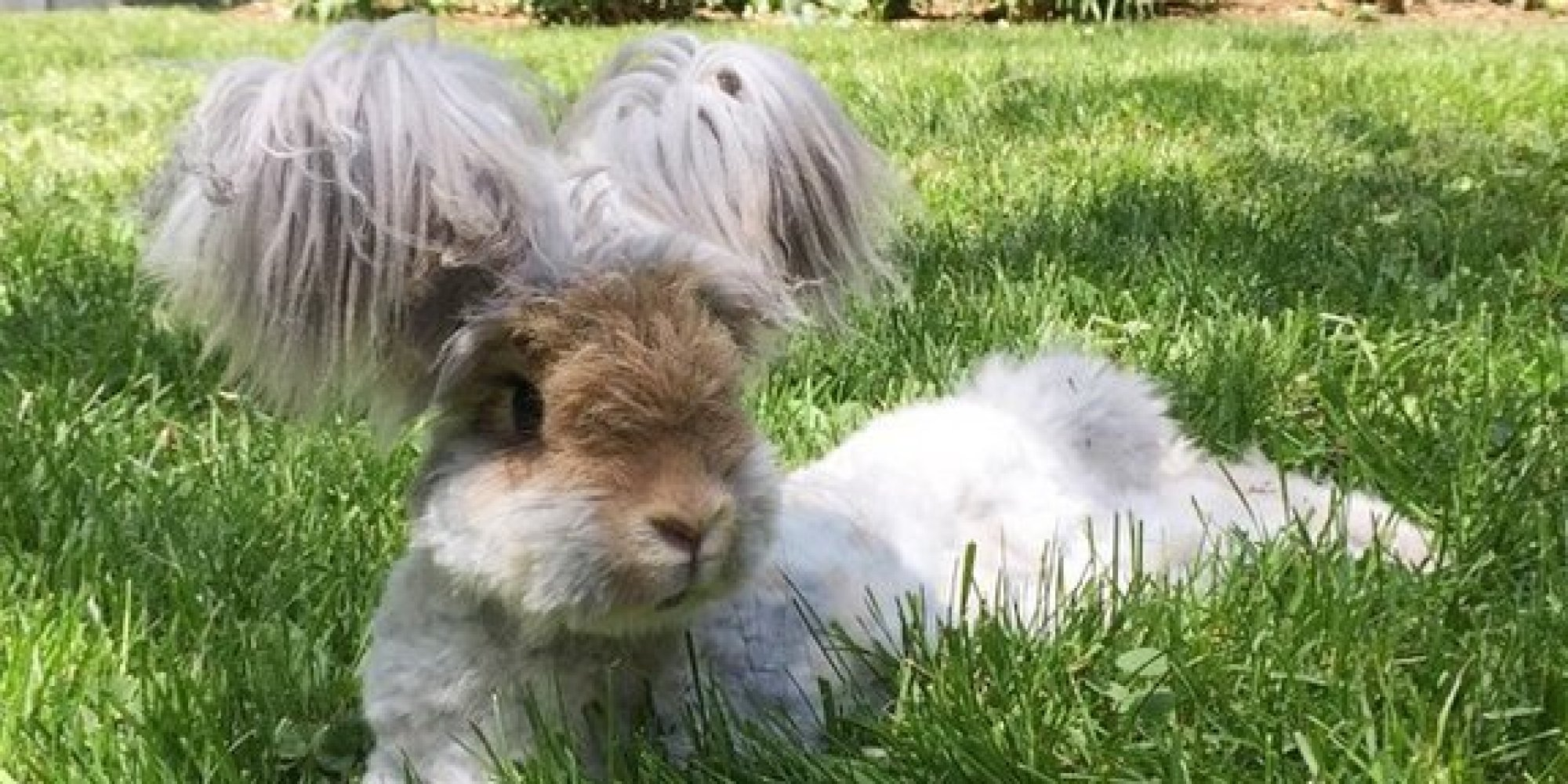 Wally The Angora Bunny Is Your Ultimate Summer