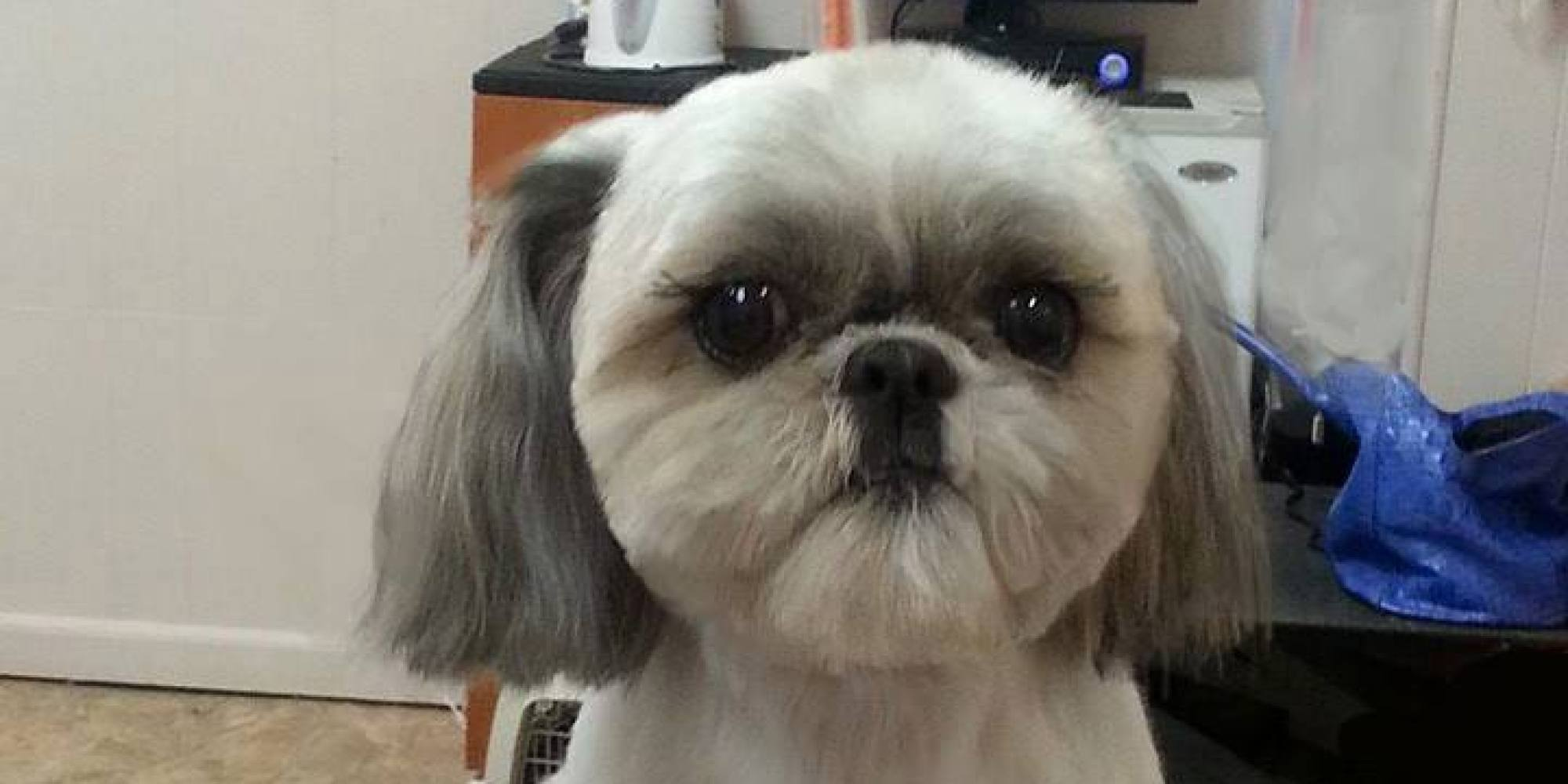 That Crazy Square Haircut For Dogs Is Available In America
