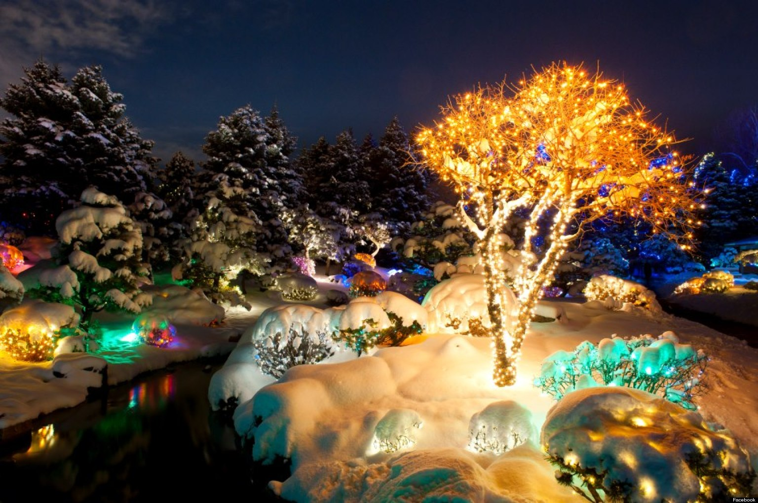 Zoo Light Denver