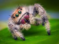 Sueño entre grillos y arañas