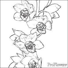 vanda orchids orchids and coloring pages on pinterest