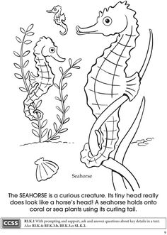 dover publications dovers and under the sea on pinterest