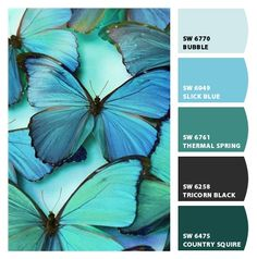 1000 images about butterfly color palette on pinterest