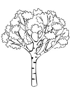 1000 images about coloring pages line drawings trees on