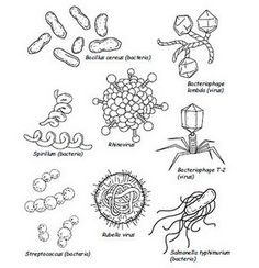 No More Spreading Germs Coloring Pages for Kids | Germ crafts ... | 244x236