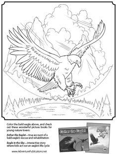 1000 images about coloring pages on pinterest birds of prey