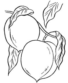1000 images about coloring sheets on pinterest fruit of the