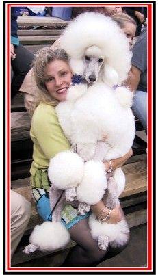 1000 Images About Standard Poodle On Pinterest Standard
