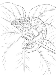 chameleons tree illustration and coloring pages on pinterest