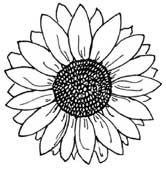 1000 images about sluneÄ nice sunflower on pinterest
