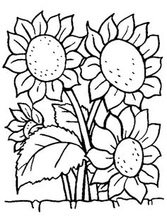line drawings sunflowers and drawings of on pinterest