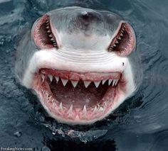 Roblox Adventures Murder Mystery 2 Jaws Shark Attack