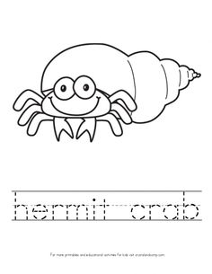1000 images about hermit crab on pinterest hermit crabs eric