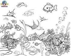 1000 images about fish tank on pinterest coloring pages bubble