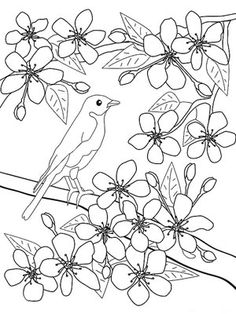 1000 images about spring coloring pages on pinterest coloring