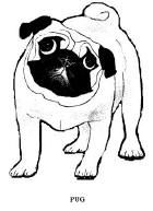 cute puppy coloring pages click on a coloring page below to