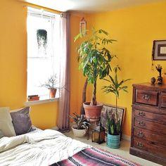 1000 Ideas About Mustard Walls On Pinterest Yellow Wall