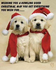 1000 Images About Christmas Cool Wallpapers On Pinterest