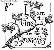 grape vines vines and leaves on pinterest