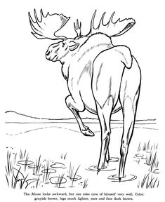 pencil of moose coloring pages