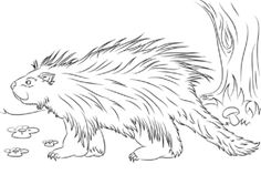 1000 images about porcupines on pinterest baby porcupine
