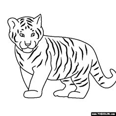 tigers coloring and coloring sheets on pinterest