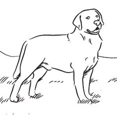 simple black lab coloring coloring pages
