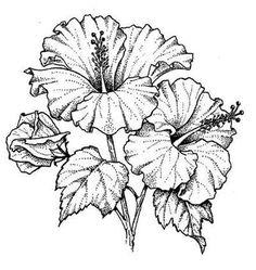 Flor De Hibiscus Desenhos Pesquisa Google Flores