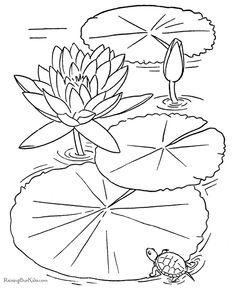pond life ponds and worksheets on pinterest