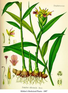 1000 images about my next tattoo on Pinterest | Botanical