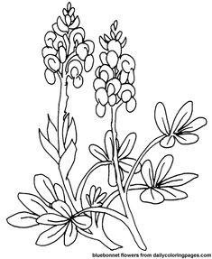 texas bluebonnet flower coloring pages more texas coloring art
