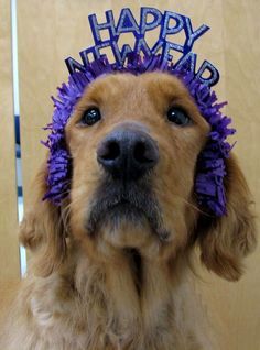 1000 Images About HAPPY NEW YEAR PAWTY On Pinterest