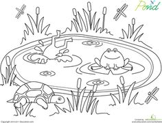 the paper maid frog life cycle http www pinterest com
