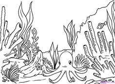 coral reefs free printable coloring pages and coloring pages for
