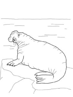 harp seal printable coloring pages and harp on pinterest