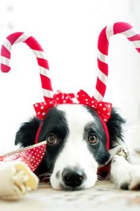 Image result for cranky christmas dogs