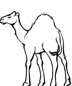 camel templates and google on pinterest