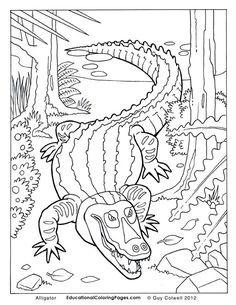 1000 images about krokodillen on pinterest crocodile