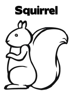 1000 images about squirrel on pinterest coloring pages cute