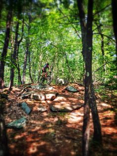 Beautiful Singletrack Descent Off Of Hall Mountain At Bear