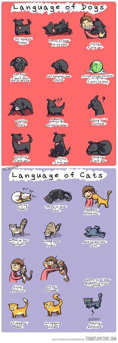 Animal Cartoons On Pinterest Simons Cat Pusheen And Cats