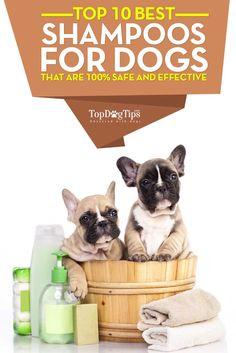 ... Medicated Dog Shampoo on Pinterest | Dog Shampoo, Puppy Shampoo and