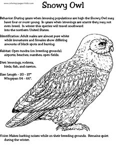 harry potter drawings snowy owl and drawing animals on pinterest